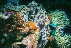 Tridacna on the Iro Maru in Palau. by Morgan Ashton