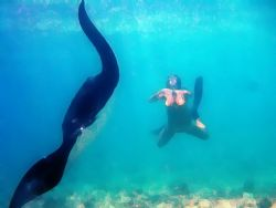 Free Diver and Manta after playing with photoshop. by Andy Kutsch