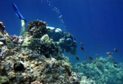Thru the Eyes of the Fish. Shot taken in Maui, Hawaii. by Mathew Cook