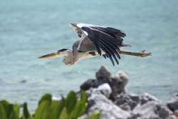 Heron by Jeff Eaton
