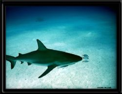 Bahamas by Joanne Fraser