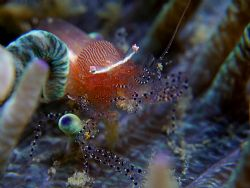 Tiny, tiny ultra rare (could be) shrimp barely visible in... by Alex Tattersall