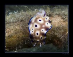 risbecia tryoni--made in Lembeh Strait, North-Sulawesi. by Marc Kuiper