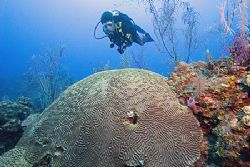 A new diver swims over coral in the Bahamas. by Michael Shope