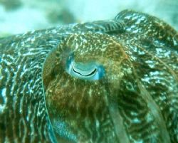 Cuttle fish eye by Joe Edwards