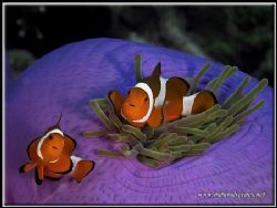 One clown fish is good but two is better. by Yves Antoniazzo