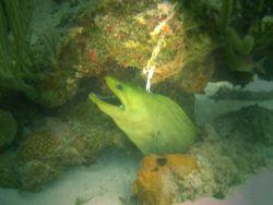Green eel hiding. by Heriberto Parrilla