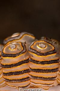 Donut (Bali style). by Mehmet Salih Bilal