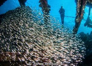 Fish rain by Taner Atilgan