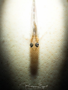 i - Light used a snoot torch to light up these ghost gob... by Philippe Eggert