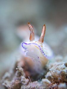 Burn and Rave