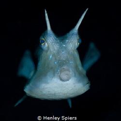 Underwater Dragon by Henley Spiers