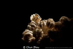 Just one glance by Chun Zhou