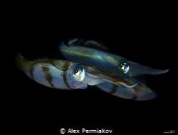 Squad of squids by Alex Permiakov