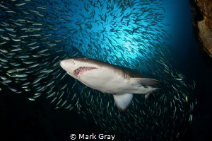 GNS at Fish Rock by Mark Gray