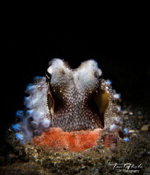 S T A R E Coconut Octopus by Ton Ghela