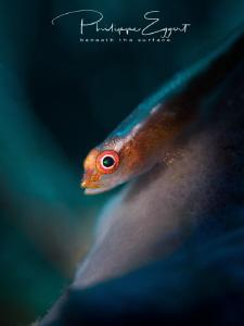 GLOWBIE courtesy Nauticam Bali @ Elab - Scubalamp by Philippe Eggert
