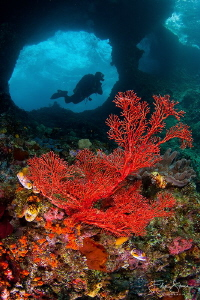 Boo windows, Missool, Raja Ampat. by Filip Staes