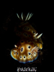 two nudis by Mark Reilly