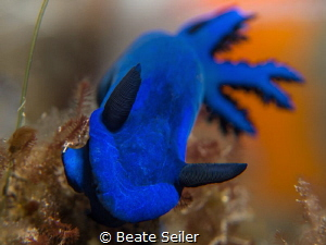 The Blue Nudi by Beate Seiler