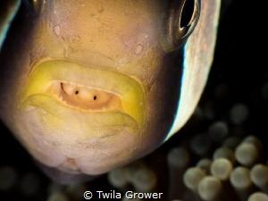 Meet my friend by Twila Grower