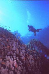 Diver over porites coral, Ras Bob, Sharm, Egypt. by Erich Reboucas
