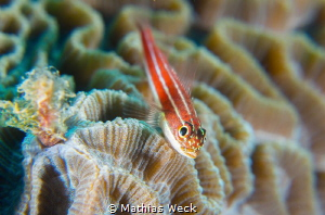 Fish with coral by Mathias Weck