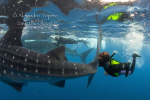 Two Whaleshaks with divers, Isla Contoy México by Alejandro Topete