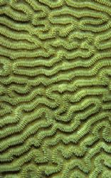 Close up of coral. 60mm. by Derek Haslam