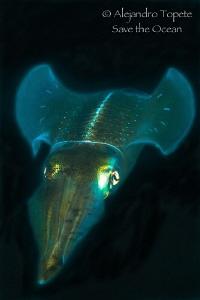 Squid Flow in Black, Veracruz México by Alejandro Topete