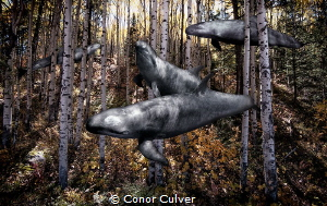 """False Hunters"" part of my Underwater Surrealism body of ... by Conor Culver"