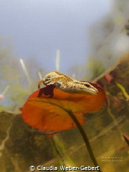 descending.....
