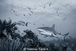 On patrol by Henley Spiers
