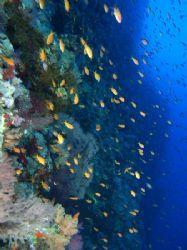 Wall at Shark reef, Ras Mohamed Park taken with Olympus E... by Nikki Van Veelen