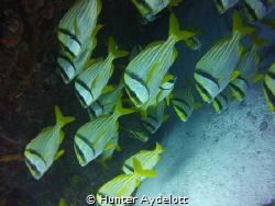Puertos Morelos in Mexico diving. The low season so not m... by Hunter Aydelott