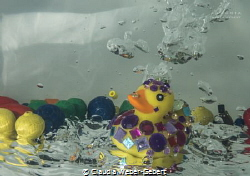experiental underwater photography - rubber ducks underwater by Claudia Weber-Gebert