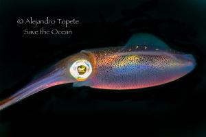Squid colors, Veracruz México by Alejandro Topete