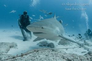 BullShark encounter, Playa del Carmen Mexico by Alejandro Topete