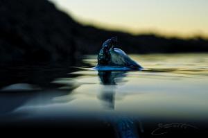 ~ Sailing Away ~ by Geo Cloete