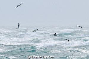 Freedom by Diana Barker