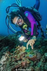 Large Nudibranch by Mathias Weck