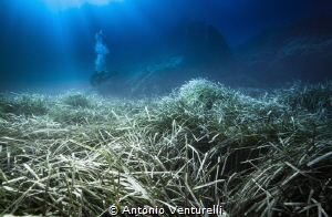 Posidonia meadows by Antonio Venturelli