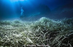 Posidonia meadows by Antonio Venturelli