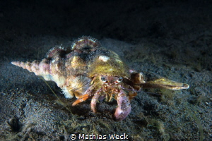 Hermit Crab by Mathias Weck