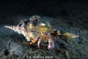 Hermit Crab by Mathias Weck
