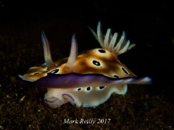 nudibranch portrait by Mark Reilly