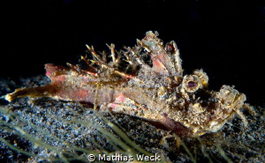 Stonefish by Mathias Weck