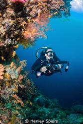 Diver explores secret reef by Henley Spiers