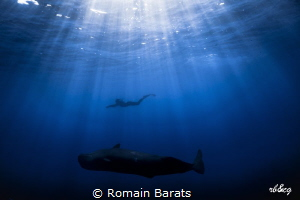 a diver and a sperwhale in harmony by Romain Barats