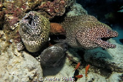 Meeting of the Eel-Brothers... by Andre Philip